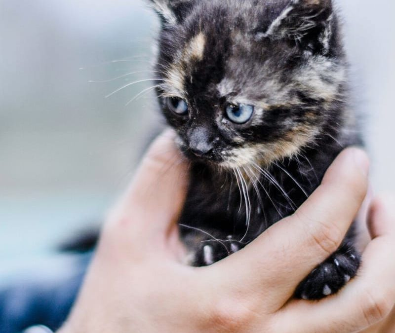 Tips for taking care of an injured animal