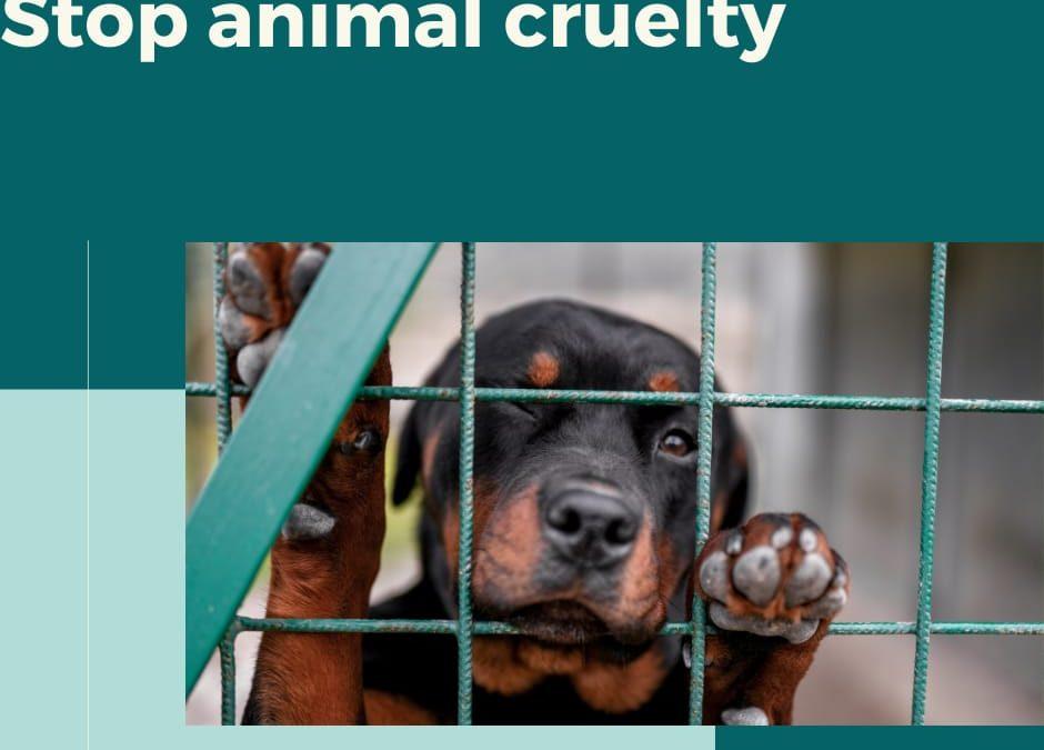 PETA's Investigations on animal cruelty