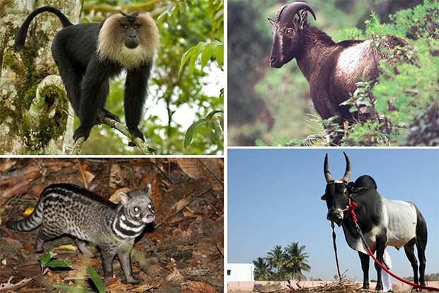 Endangered Animals In Tamil Nadu
